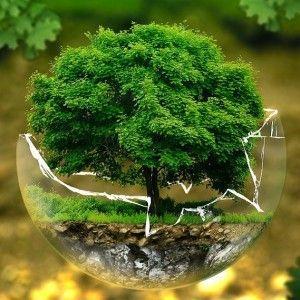 environmental-protection-326923_1280.1